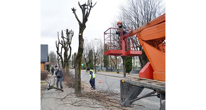 Pavasariniai darbai pradėti: keliami inkilėliai, genėjami medžiai...