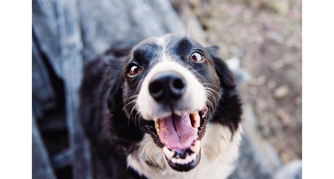 Švarūs dantys - laimingas šuo